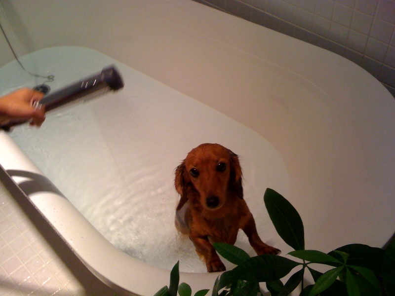 ココちゃん入浴中♪